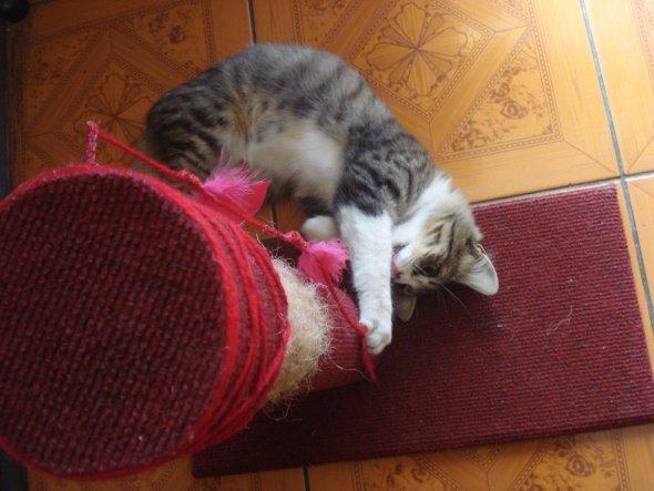 Котёнок рядом с когтеточкой
