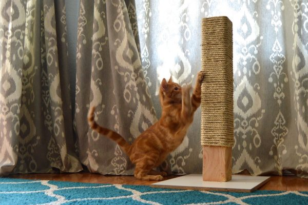 Кот точит когти о когтеточку-столбик