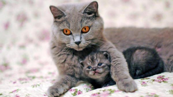 Мама-кошка и котенок