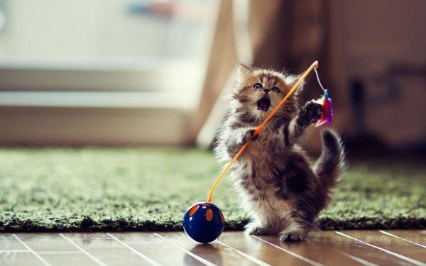 Играет котёнок