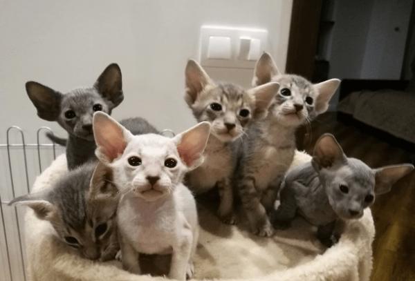 Котята в гнезде