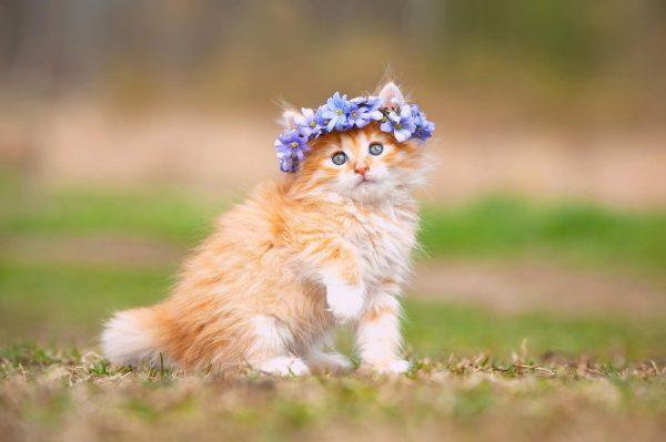 Рыжий котёнок с венком из цветов
