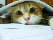 Кот под листами бумаги