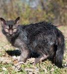 Кот на поляне