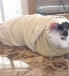 Кот, завёрнутый в полотенце, лежит на столе