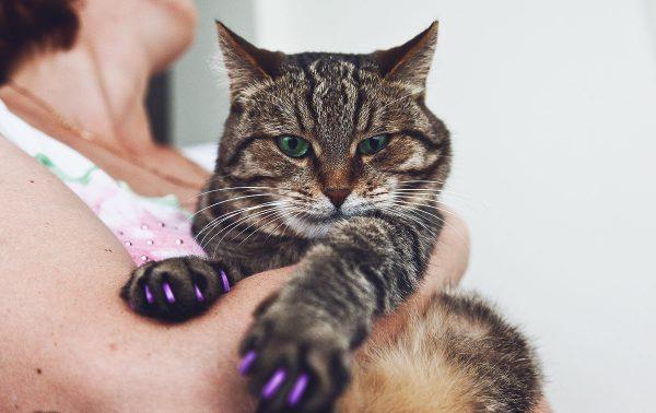 Защитные колпачки на когтях у кота, сидящего на руках у женщины