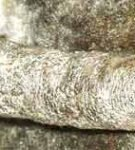 Узловато-кистозная форма акне на хвосте у сфинкса