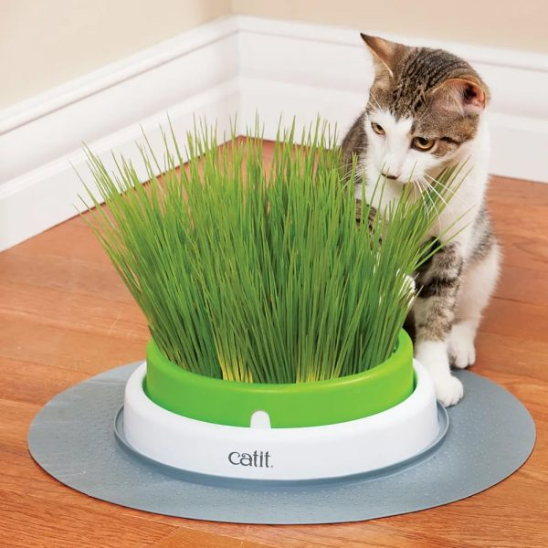 Кот сидит рядом с устройством Catit Senses