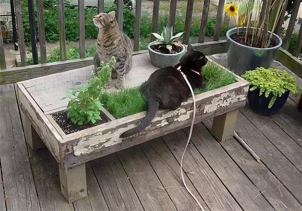 Коты на балконе среди растений, расположенных на подставке