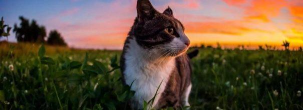 Кот идёт по лугу