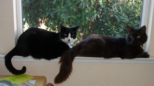 Пара кошек на окне