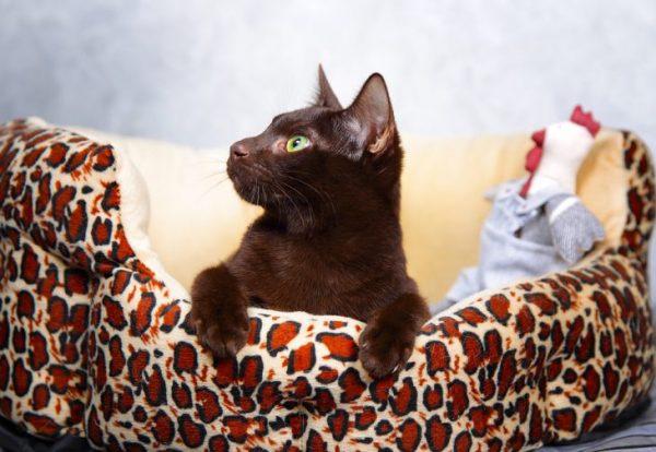 Йоркская кошка на лежаке