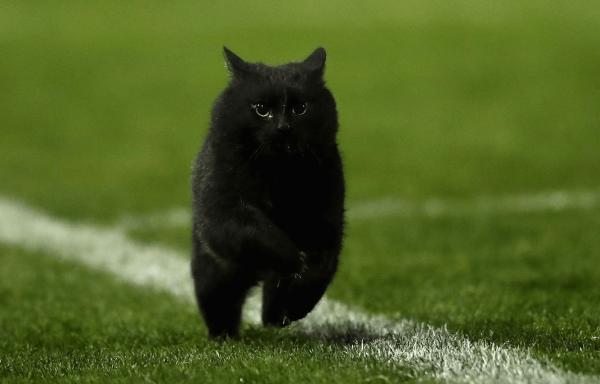 Йоркская кошка на прогулке