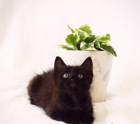 Котёнок беспородный
