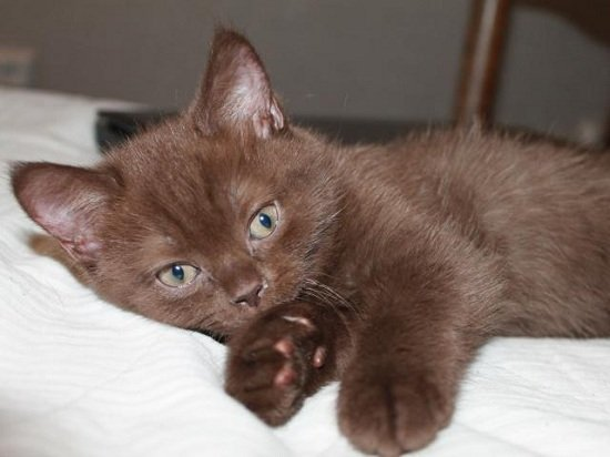 Лежащий котёнок