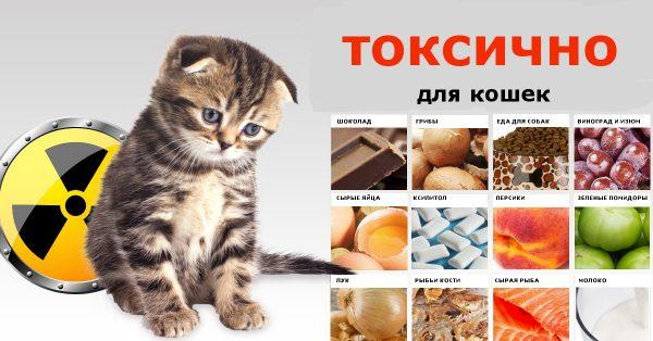 Токсичная еда для кошек