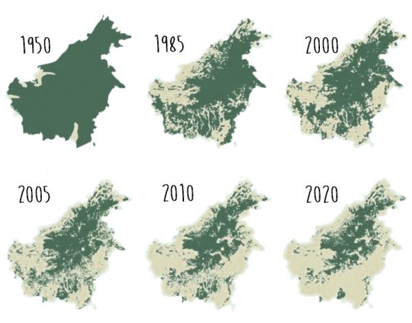 Сокращение площади лесов Калимантана