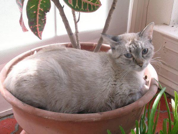 Кошка в горшке с цветком