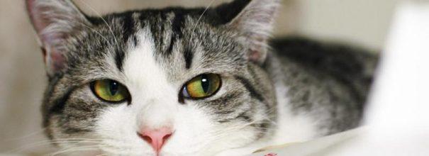 Запахи, отталкивающие кошку