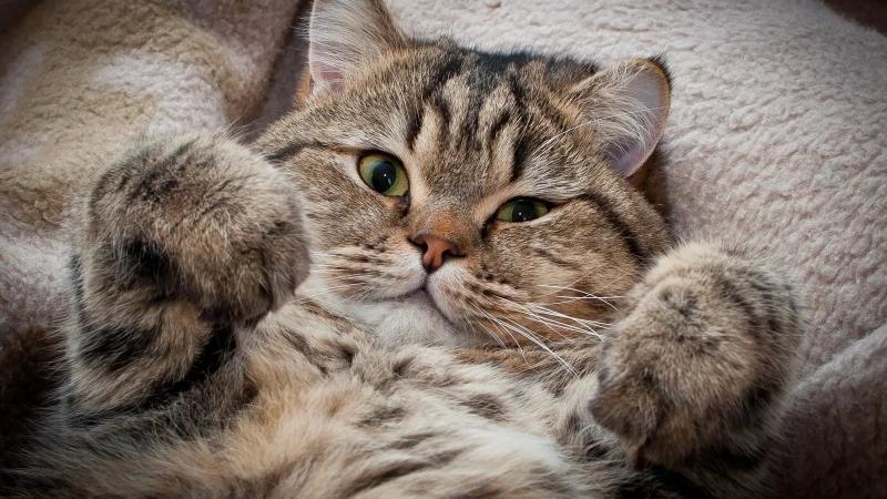 Причины по которым чихают коты
