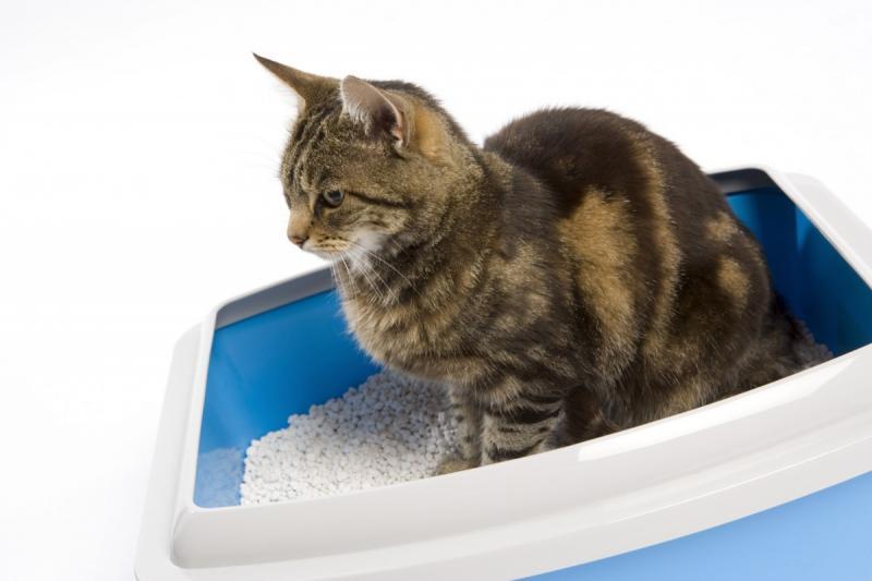 Когда медлить нельзя или почему кот какает с кровью