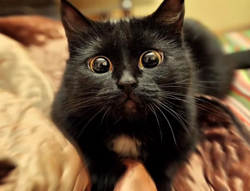 Болезни глаз у кошек 🐈 Симптомы и лечение глазных болезней котов