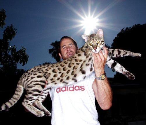 Кошка Жоффруа на руках