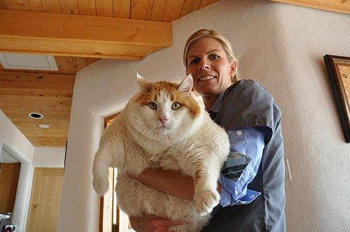 Женщина держит на руках толстого бело-рыжего кота