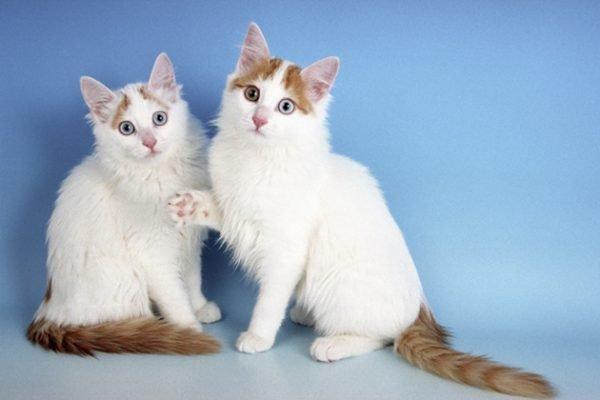 Два котёнка
