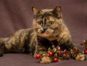 Черепаховая кошка