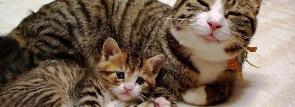 Котёнок лежит рядом с кошкой