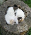 Кот в старом пне