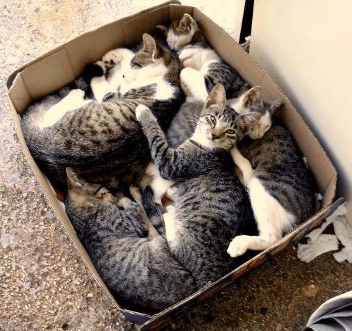 Много котов в коробке