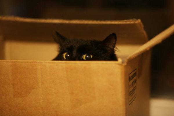 Чёрный кот в коробке