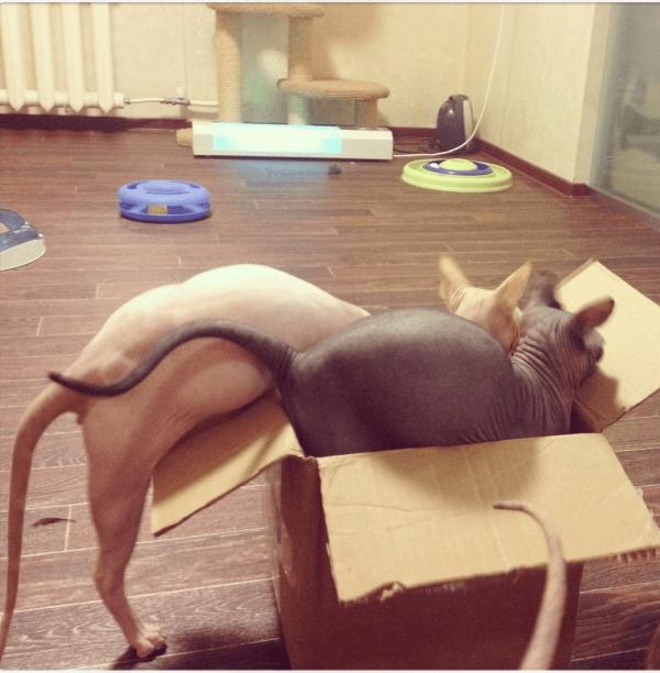 Два сфинкса в коробке
