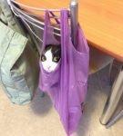 Кот в кульке