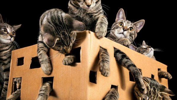 Кошки в большой коробке
