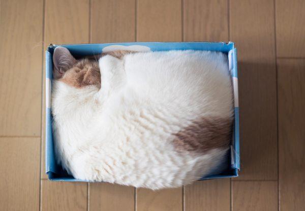 Кот в коробке из-под обуви