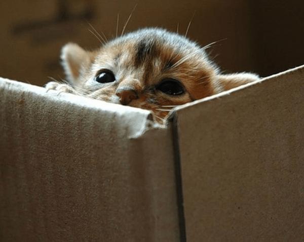 Маленький котёнок в коробке