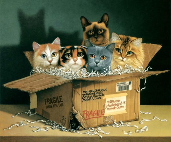 Кошки сидят в коробке