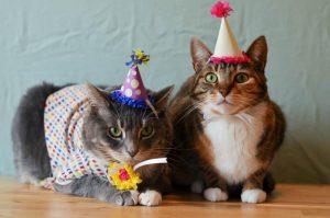 День рождения котиков