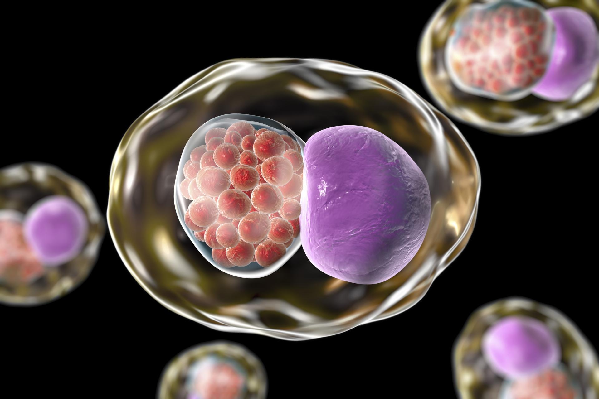 Хламидиоз антибиотики схема лечения