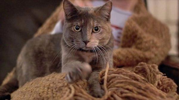 Кот «топчет» хозяина