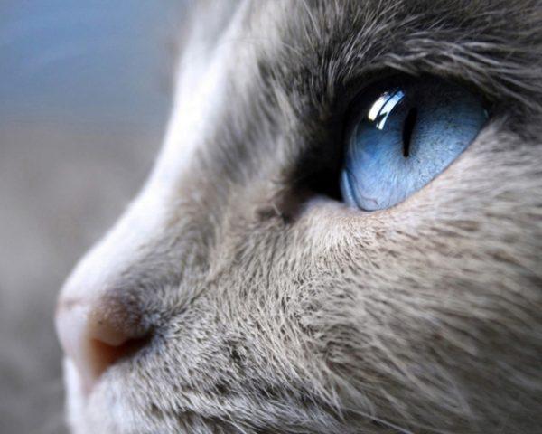 Белая кошка в профиль