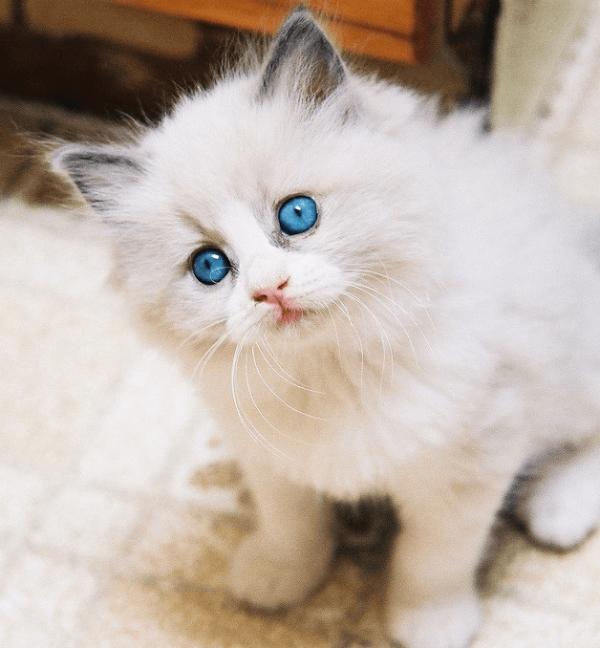 Белый котёнок сидит