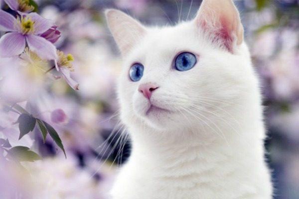 Белая кошка с цветами