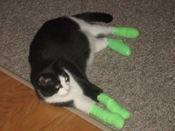 Кошка после удаления когтей