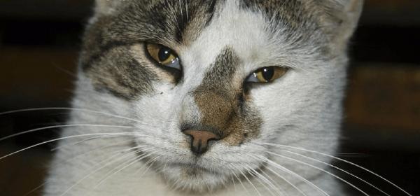 Полуприкрытые глаза у кота