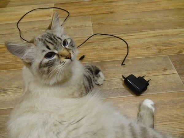 Кошка разгрызла зарядное устройство
