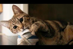 Котёнок грызёт обувь
